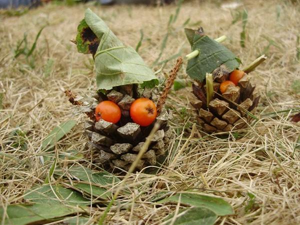 Pommes de pin lutins